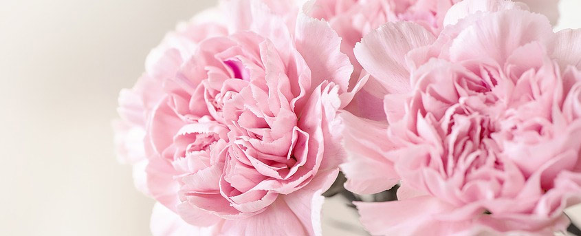 Mothers Day Flowers & Gifts - Carnations