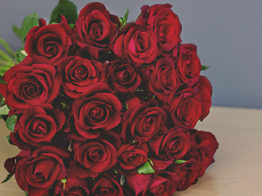 Bouquet of 24 red roses, lying on a table