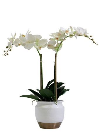 Silk Flowers & Plants: Phalenopsis Orchid In Ceramic (Silk)