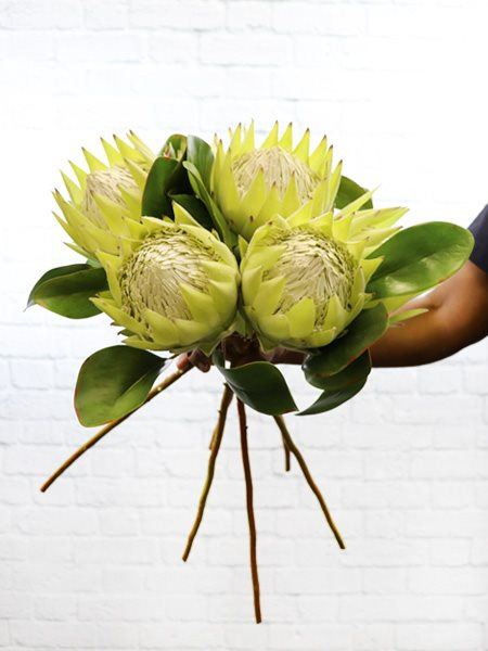 Silk Flowers & Plants: Protea Stems - 6 x Green