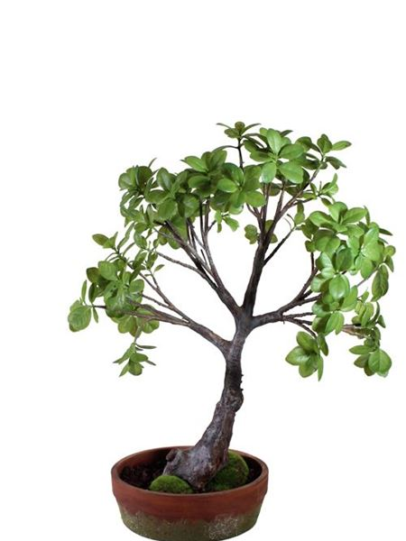 Silk Flowers & Plants: Bonsai Ficus - Potted