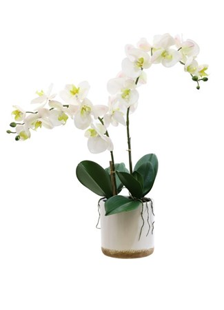 Silk Flowers & Plants: Real Touch Phalenopsis Orchids