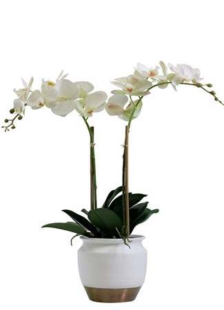 Romance flowers bouquets and arrangements by sa florist silk flowers plants phalenopsis orchid in ceramic silk mightylinksfo